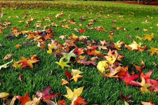 Aspiratori di foglie: indicazioni utili per scegliere il migliore aspiratore/soffiatore